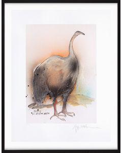 Extinct New Zealand Moa.
