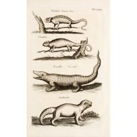 Chamaeleon Cinereus Verus. Chamaeleon. Crocodilus. Crocodyll. Laudiuerba.